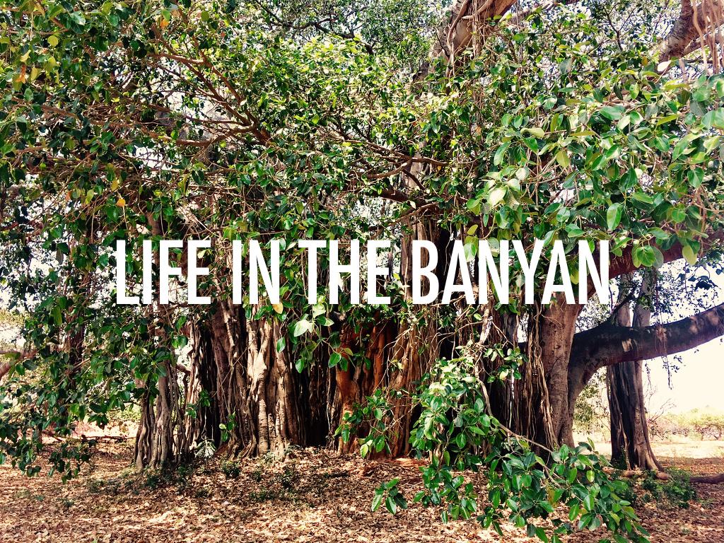 Banyan_Photo_Story.001