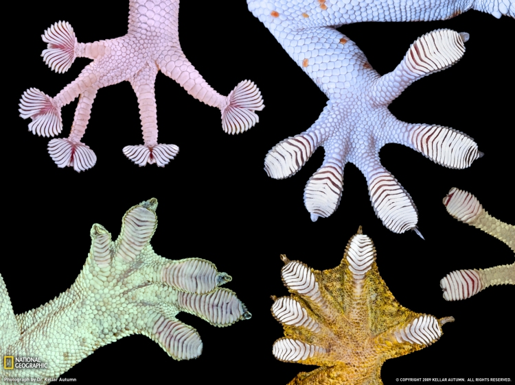 gecko-feet-kellar-autumn