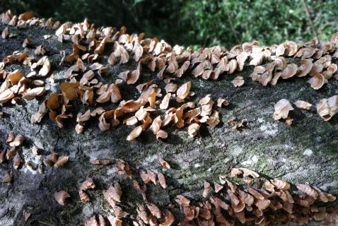 Closeup on tree fungus