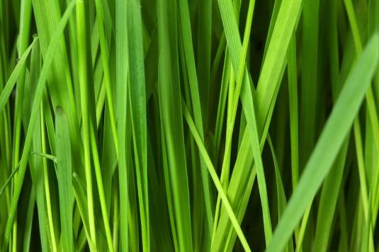 grass-16044_1920