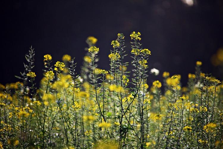 blossom-1785901_1920