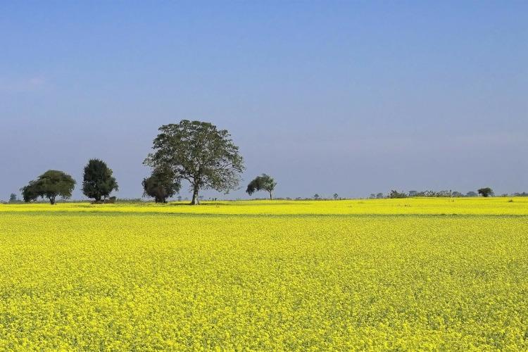 mustard-255827_1920.jpg